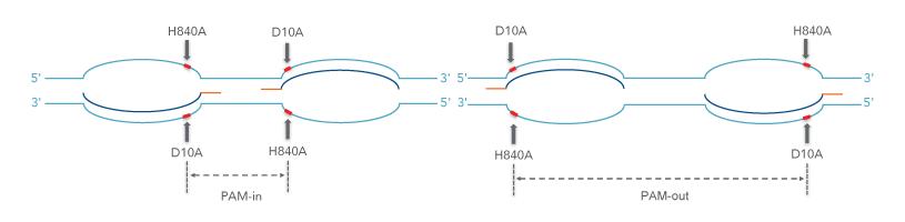 cas9-pam-site-orientation-for-nickase-experiments