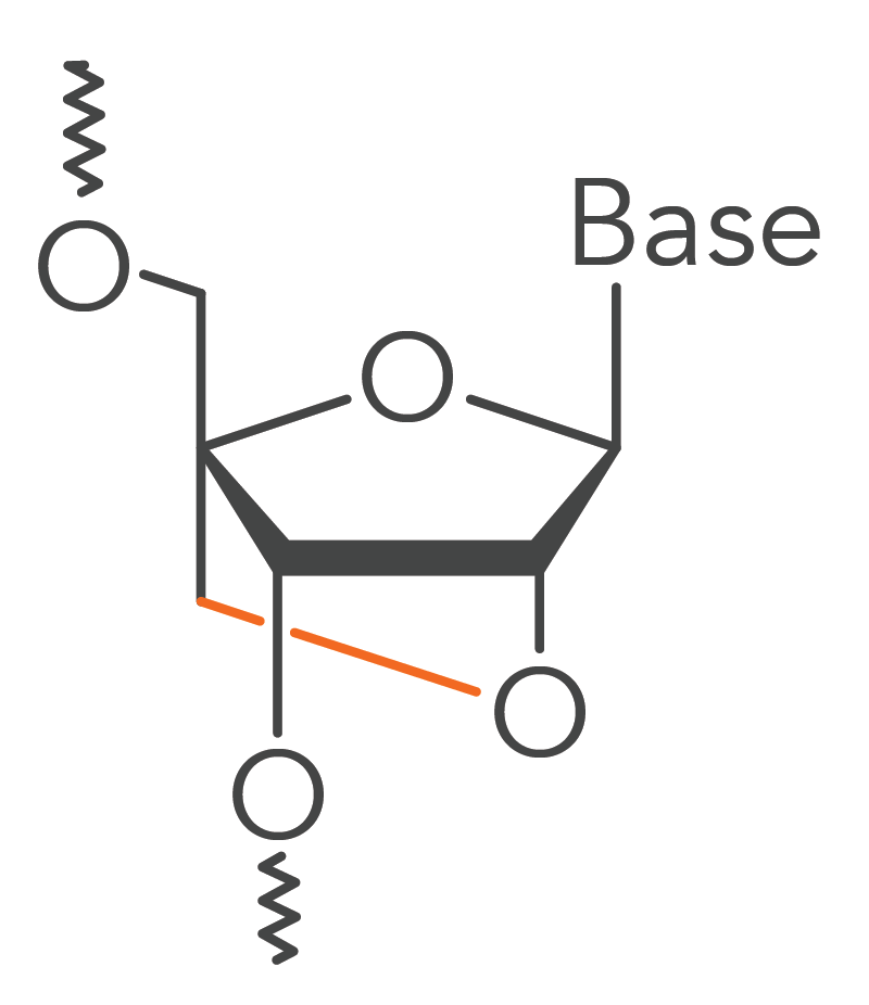 A locked nucleic acid base