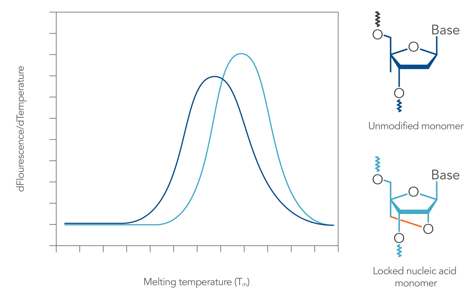 Locked nucleic acid bases increase sequence melting temperature