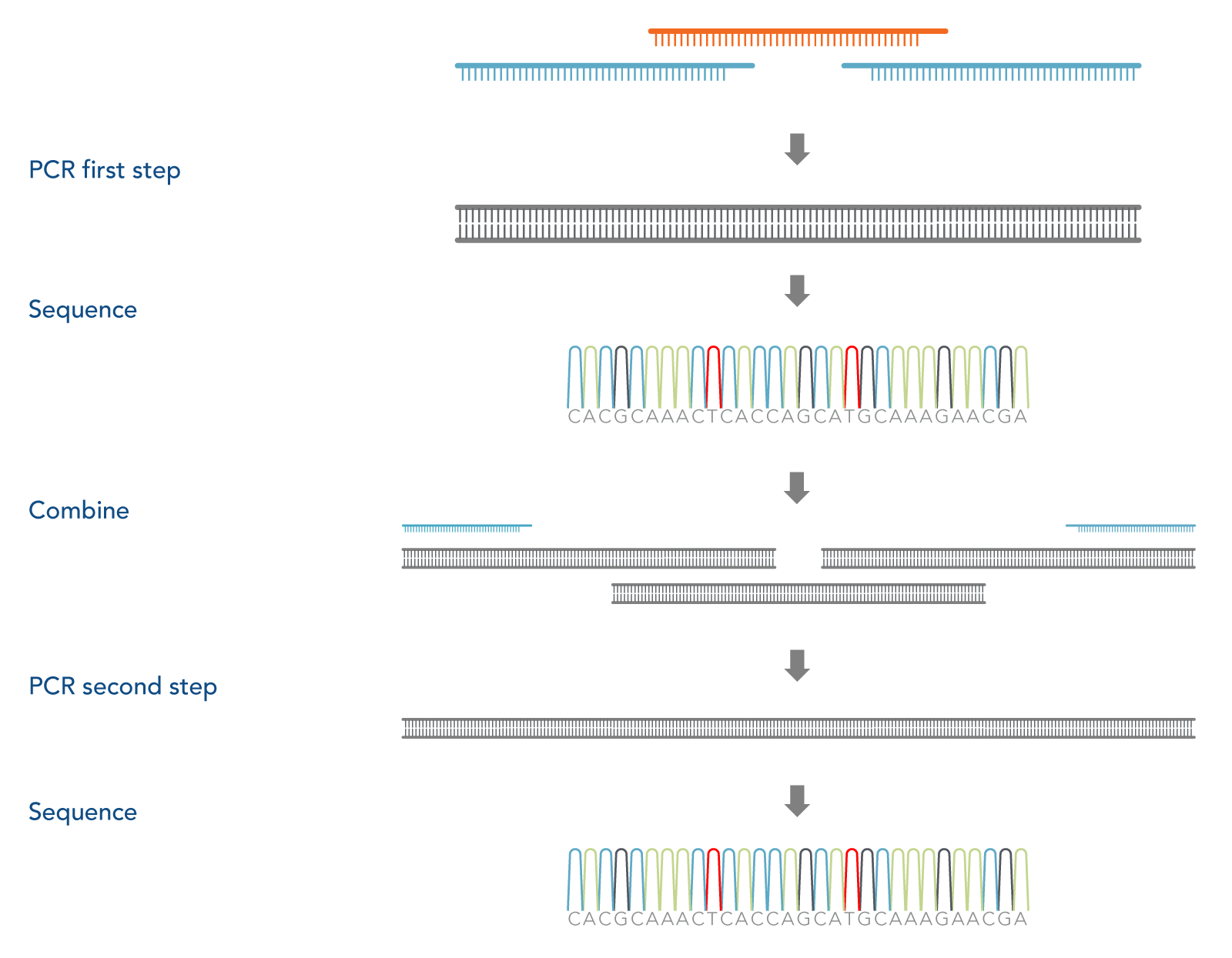 Two-step assembly PCR for cloning