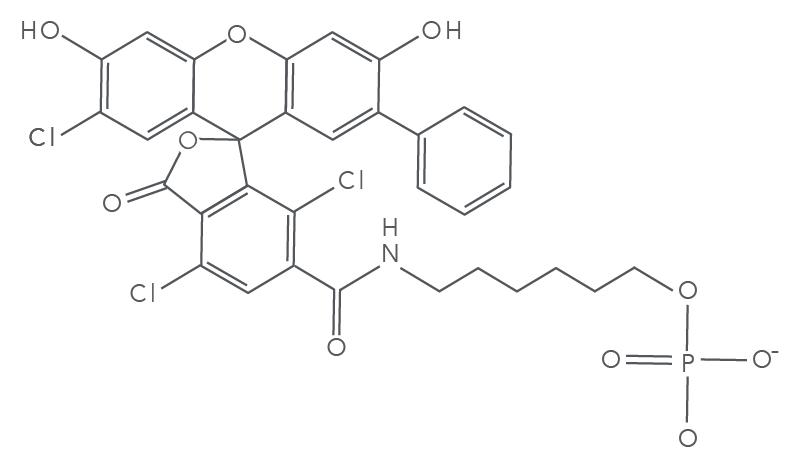 SUN fluorophore molecular structure