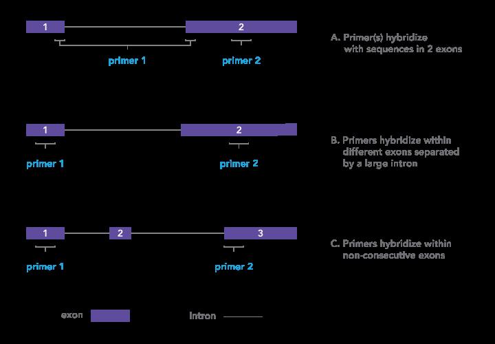 Art52-Fig1-New-Schematic-Request_Maureen_v3