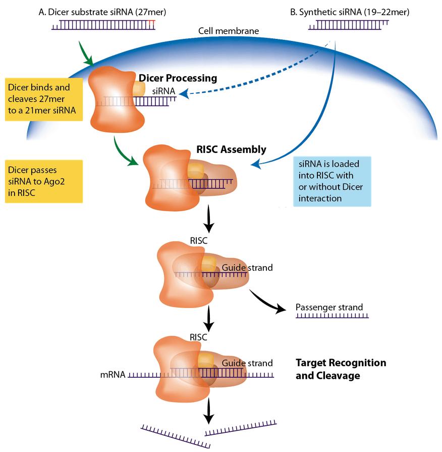 art75-CC-antisense_Fig1