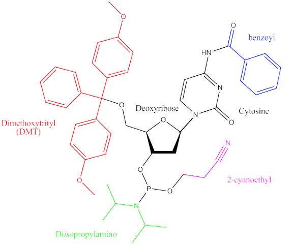 Phosphoramidite monomer for oligos