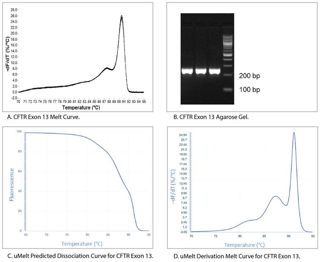 Comparative melt curve analysis of CFTR exon 13 amplicon