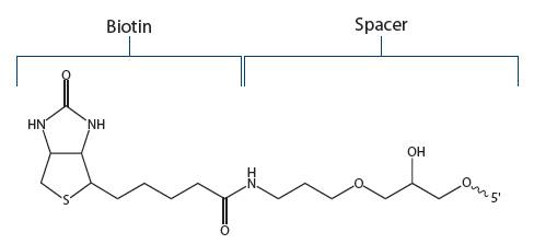 Biotin Fig 2