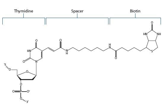 Biotin Fig 3