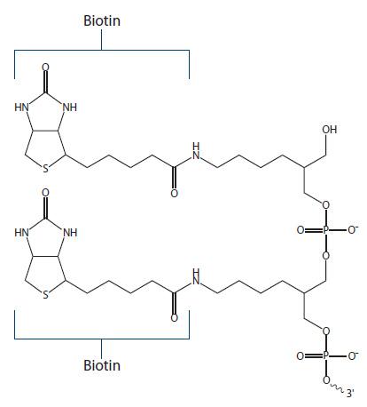 Biotin Fig 4