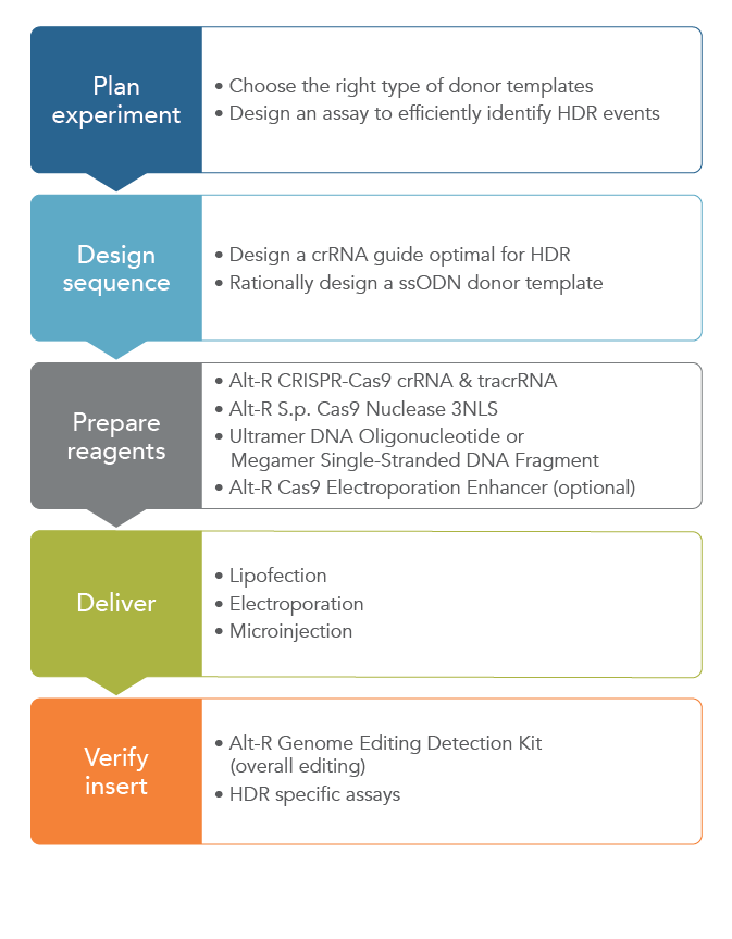 Incorporate a ssODN template into your CRISPR design for HDR applications of CRISPR.