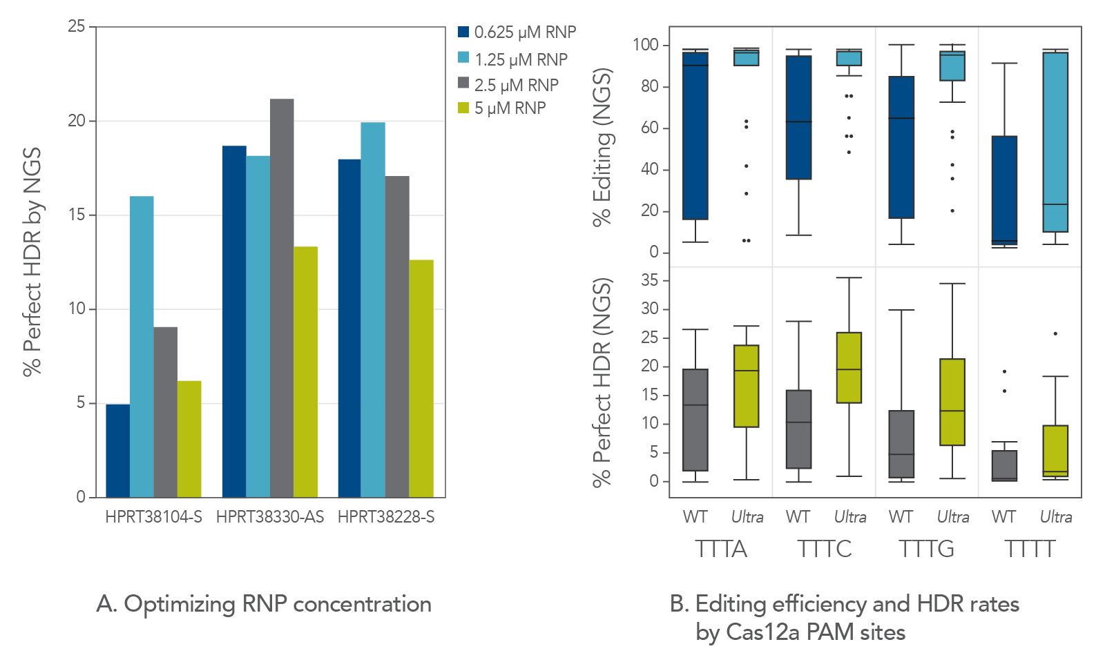 Cas12a Ultra RNP concentration and PAM sequence affect percent editing and perfect HDR rates.