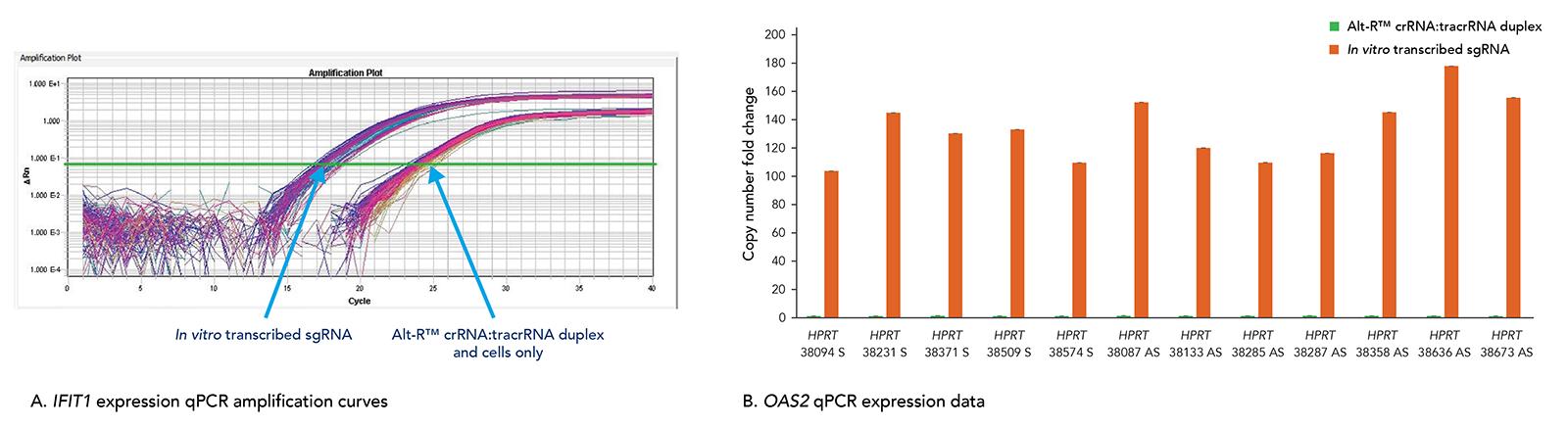 Alt-R CRISPR-Cas9 System does not trigger a cellular immune response.