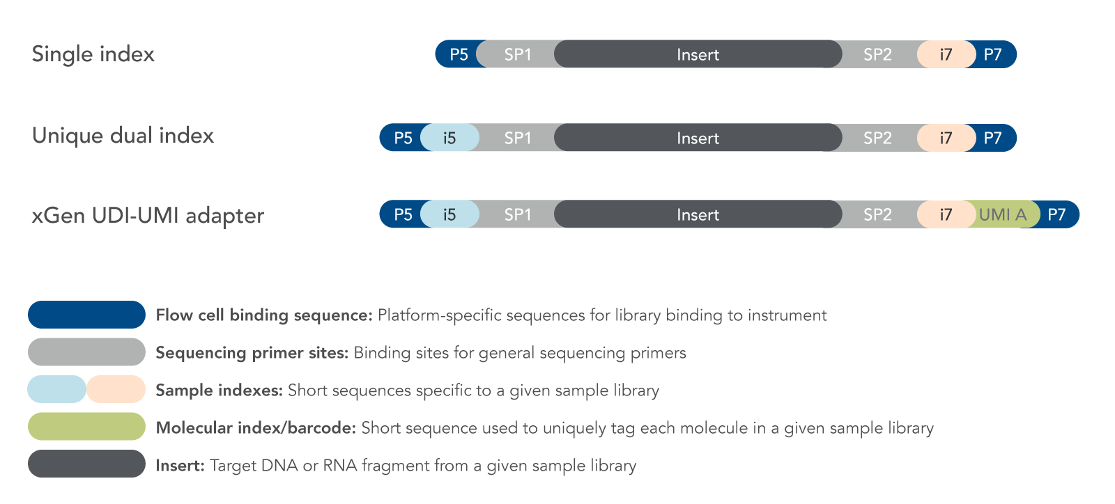 Options for sequencing adapters with molecular barcodes