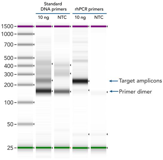 rhPCR amplification gel